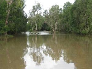 Flooded Creek at Kowanyama